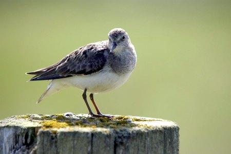 Птицы севера