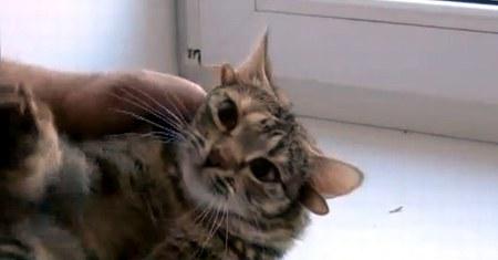 Кошка с пятью ушками