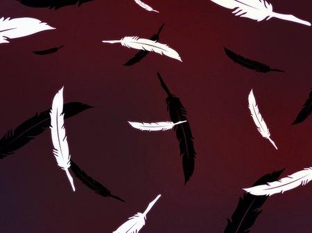 Черно-белое крыло