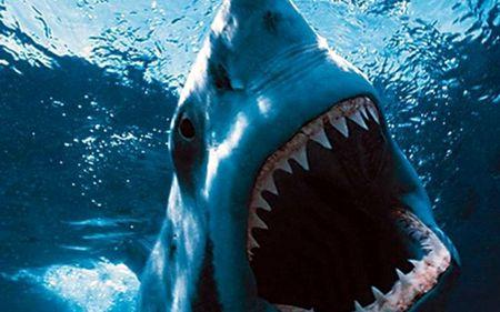 Нападение акулы на человека