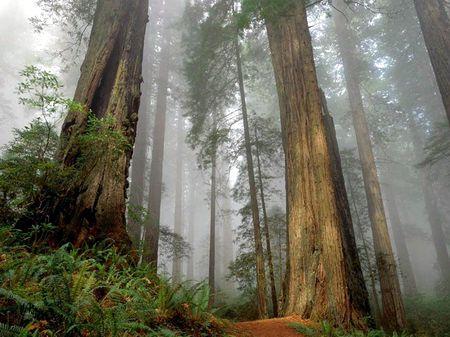 Десять самых удивительных деревьев в мире