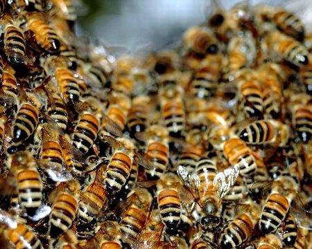 Самолет Благовещенск-Москва летел с роем пчел на борту