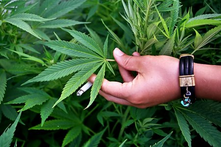 Американец пожаловался в полицию на плохую марихуану