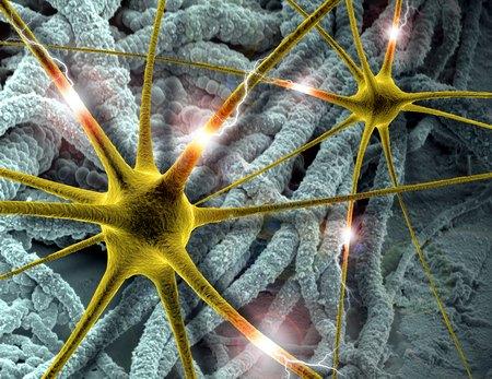 Ученые научились считывать «видео» из человеческого мозга