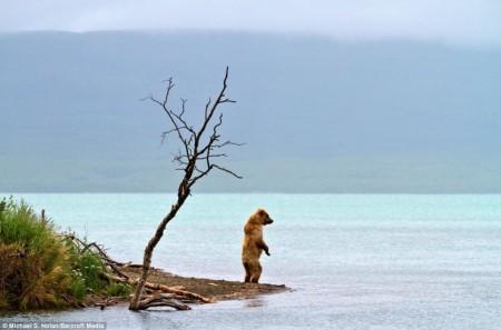 Медвежий пикник