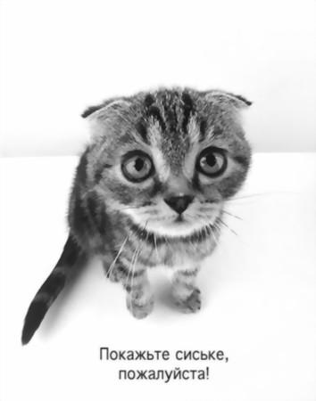 Сиськи рулят!!!