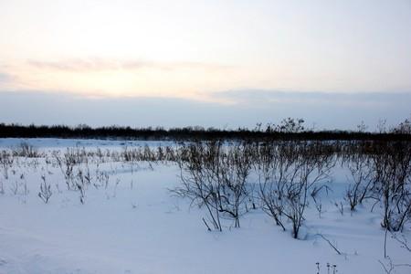 Январский фотосет тундры