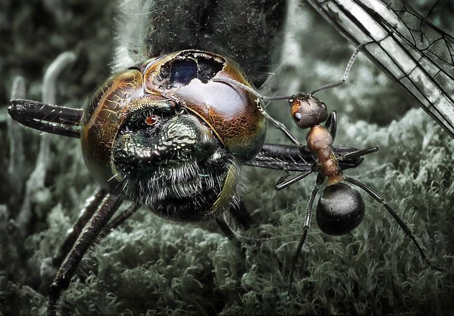 Скачать музыку для муравьев