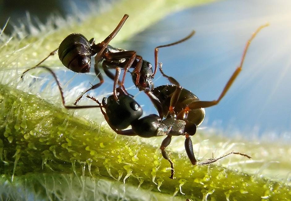 Прикольные картинки муравьи, любви