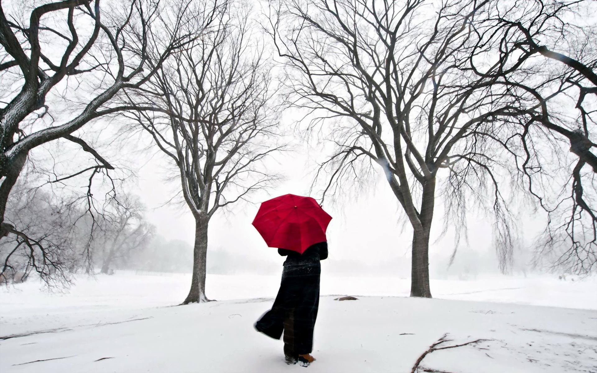 Черно белая зима 24 фотография