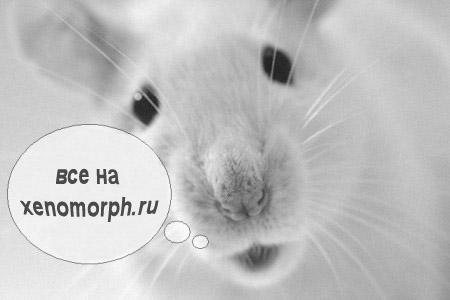 Год мышей...