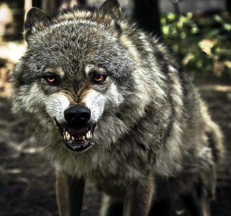 Волчары