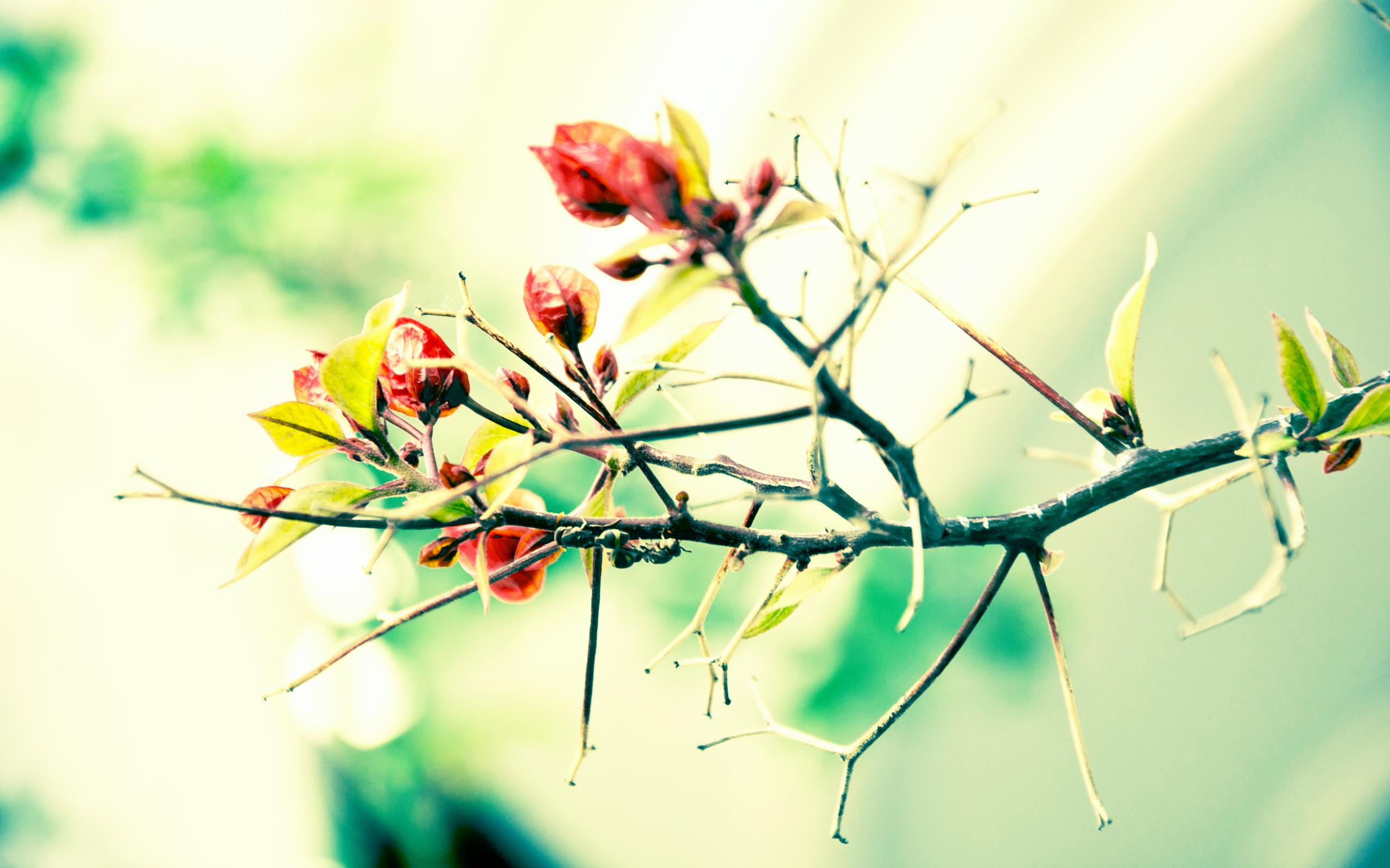 Цветы ветка без смс