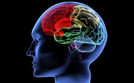 Способности человеческого мозга