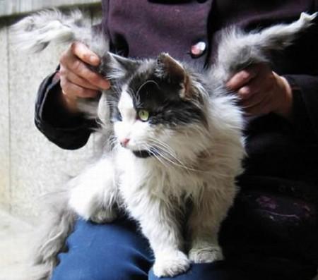 В Китае живёт кот с крыльями