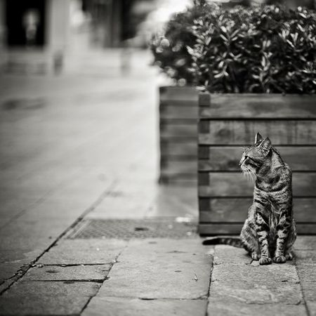 Моно-котє