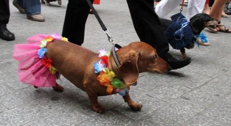 В Польше прошел традиционный Парад Такс