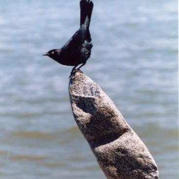 Bill Dan Rock Balancing