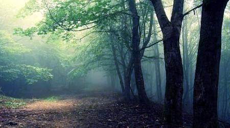 10 таинственных лесов с нечистой силой