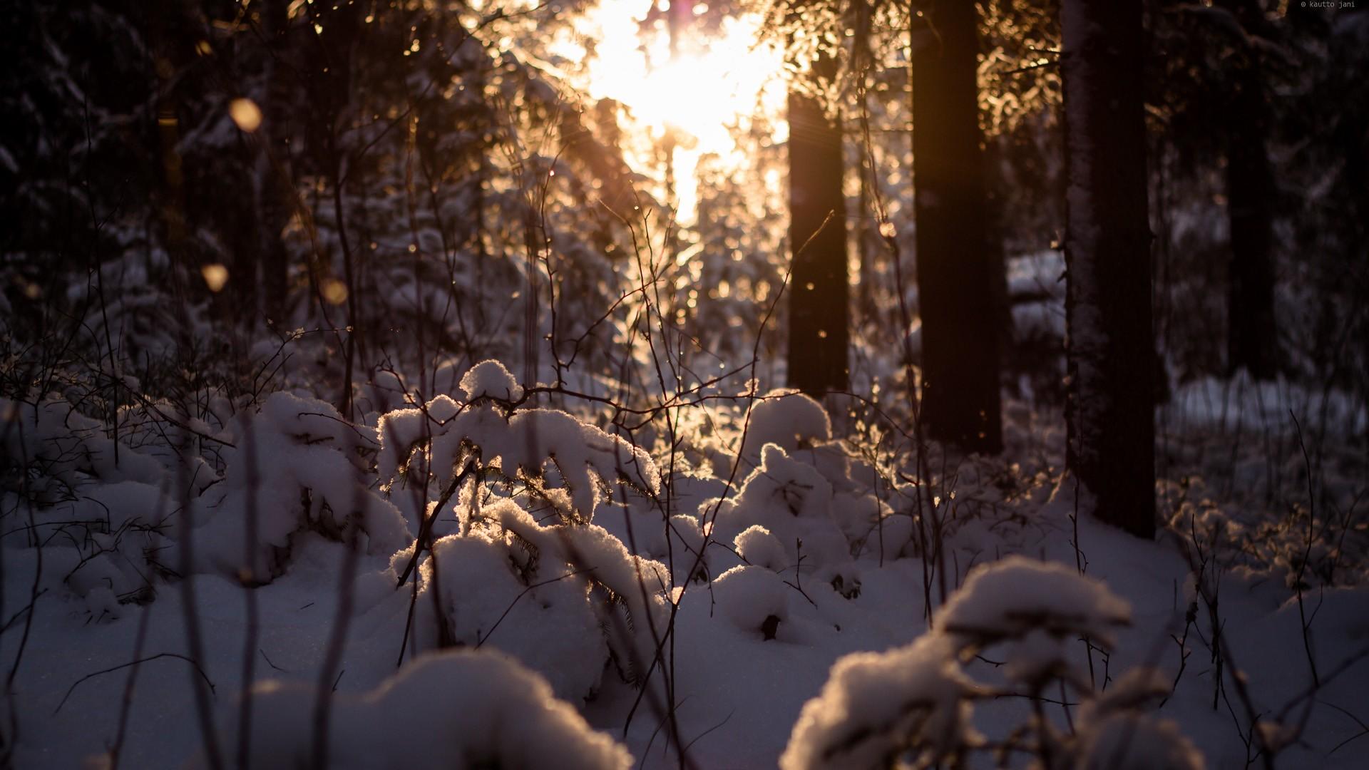 Лес в снегу смотреть