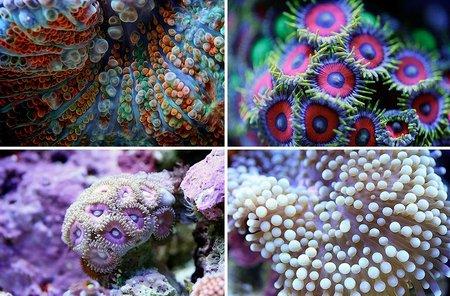 Макросъемка кораллов