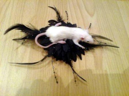 Украшения из крыс