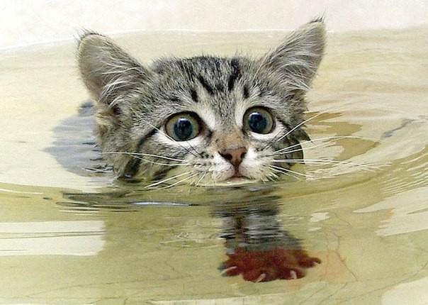 Кота помыли