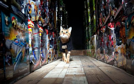 В Британии склад игрушек охраняет кошка