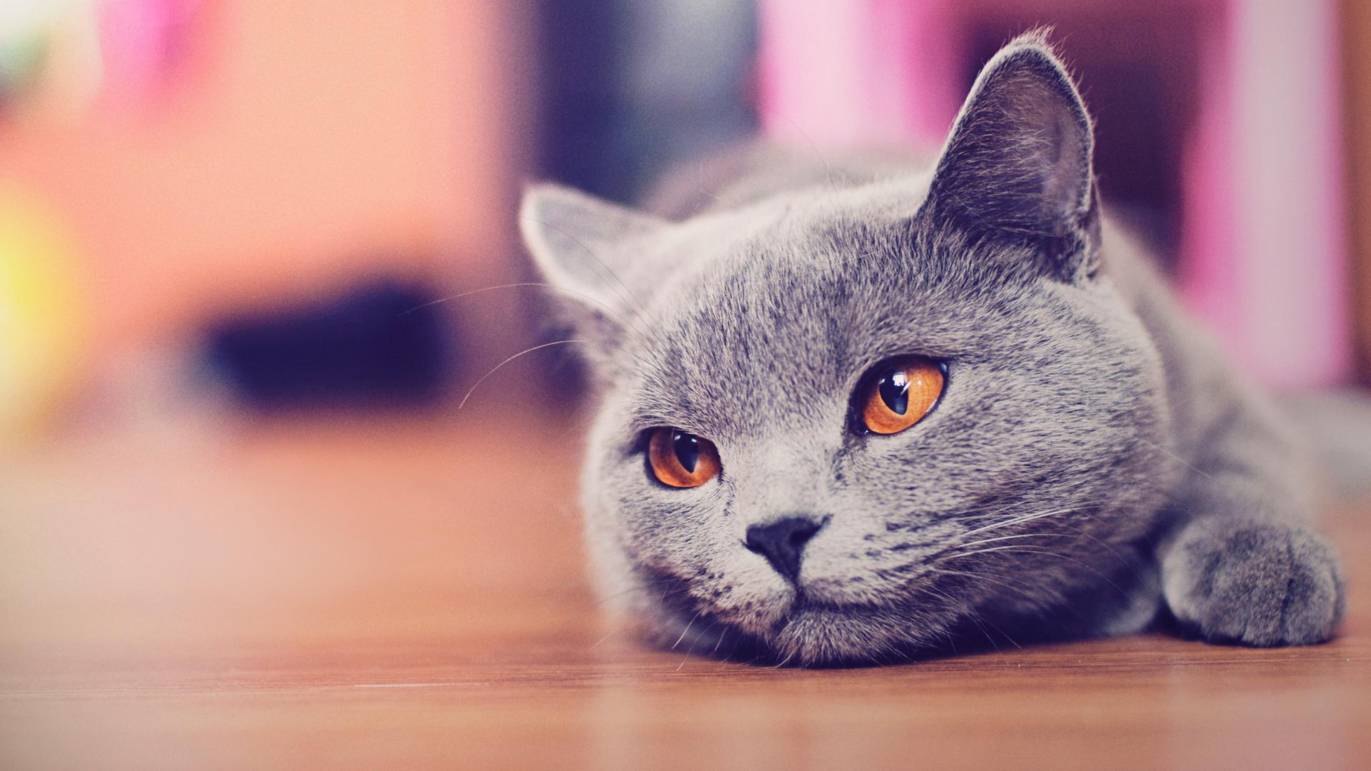 кошка язык глаза сердечки  № 2824880 без смс