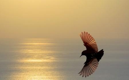 Птицы 19
