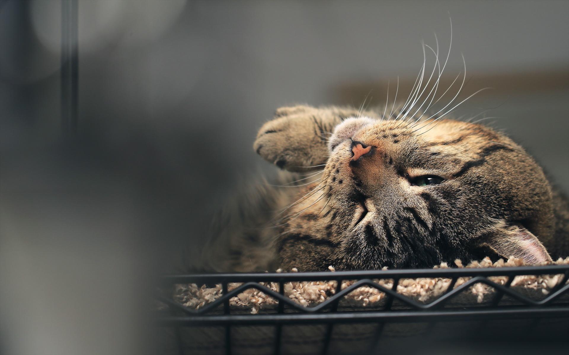 кот животное кресло морда  № 1943863  скачать