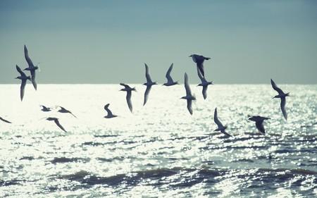 Wallpaperz - Птицы