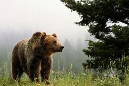 Русские туристы избили польского медведя руками до потери сознания
