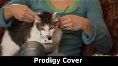 The Cat - Smack My Bitch Up (Prodigy Cover)
