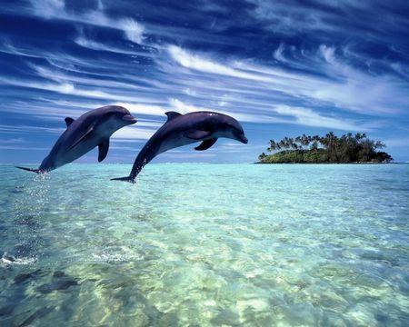 Дельфинов признали личностями