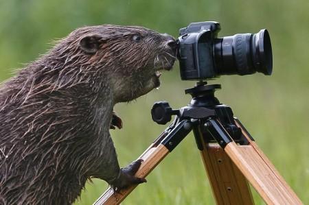 Бобёр-фотограф