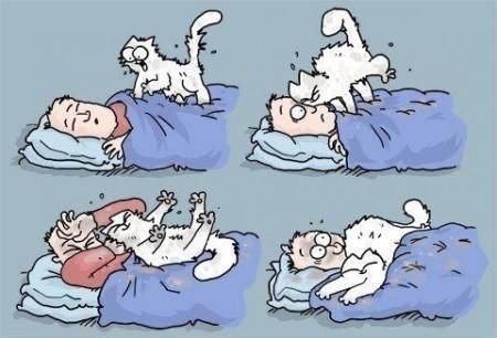 Если в доме нет кота...