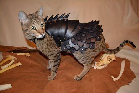 Кошачья боевая броня