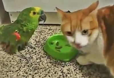 Попугай хамит коту