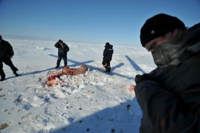 За один день экологи обнаружили 2 убитых белых медведя на острове Вайгач