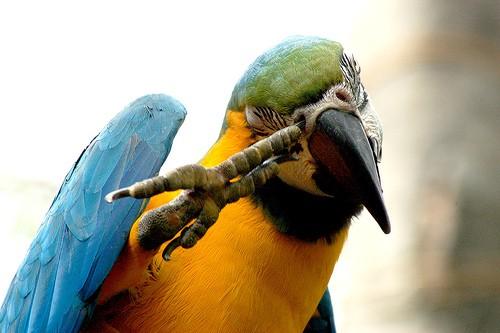 птицы - тоже много фоток