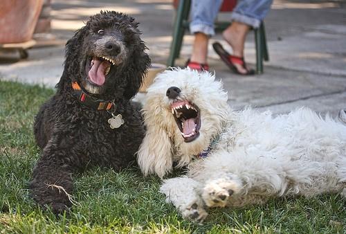 собаки - много фоток :)
