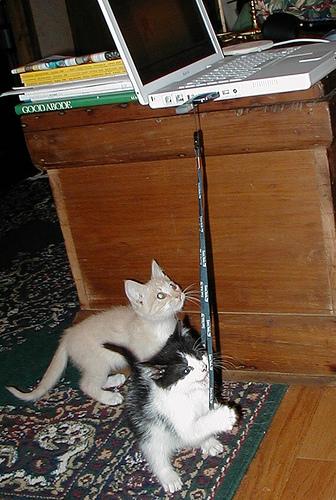 кошки - много фоток :)