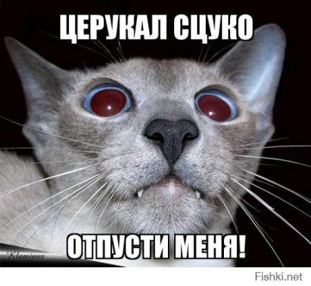 Заднеприводной кот