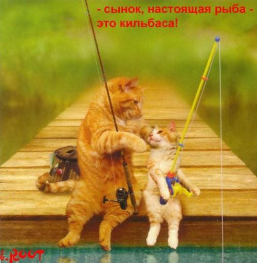 видео с котами рыболовами