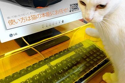 В Японии придумали защиту клавиатуры от кошек