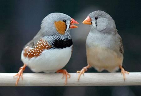 Птиц впервые застали за спором о родительских обязанностях