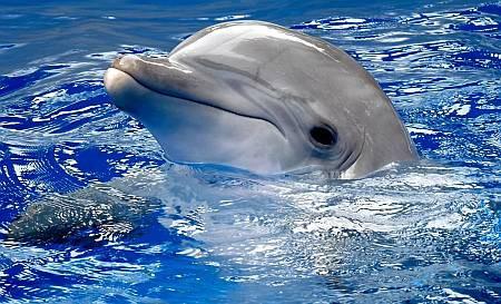 Ученые впервые посмотрели на мир сонарами дельфина