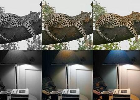 Компьютер научили раскрашивать черно-белые фотографии