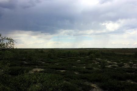 Тундра - Июнь 2016 дождь
